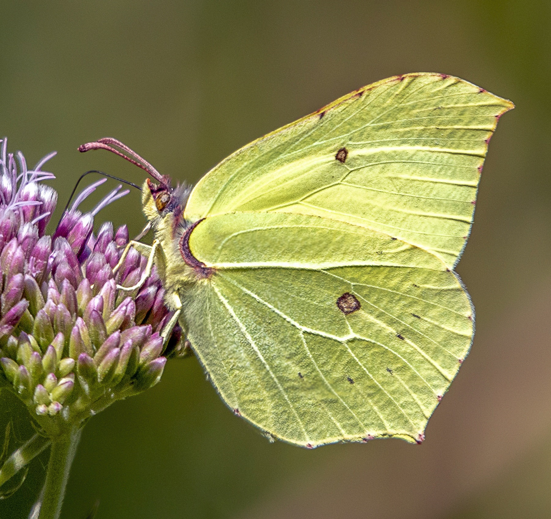 Nearly 400 species of invertebrate have been identified at Carr Lodge
