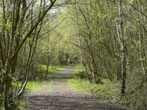 Path at Fryston Country Trails