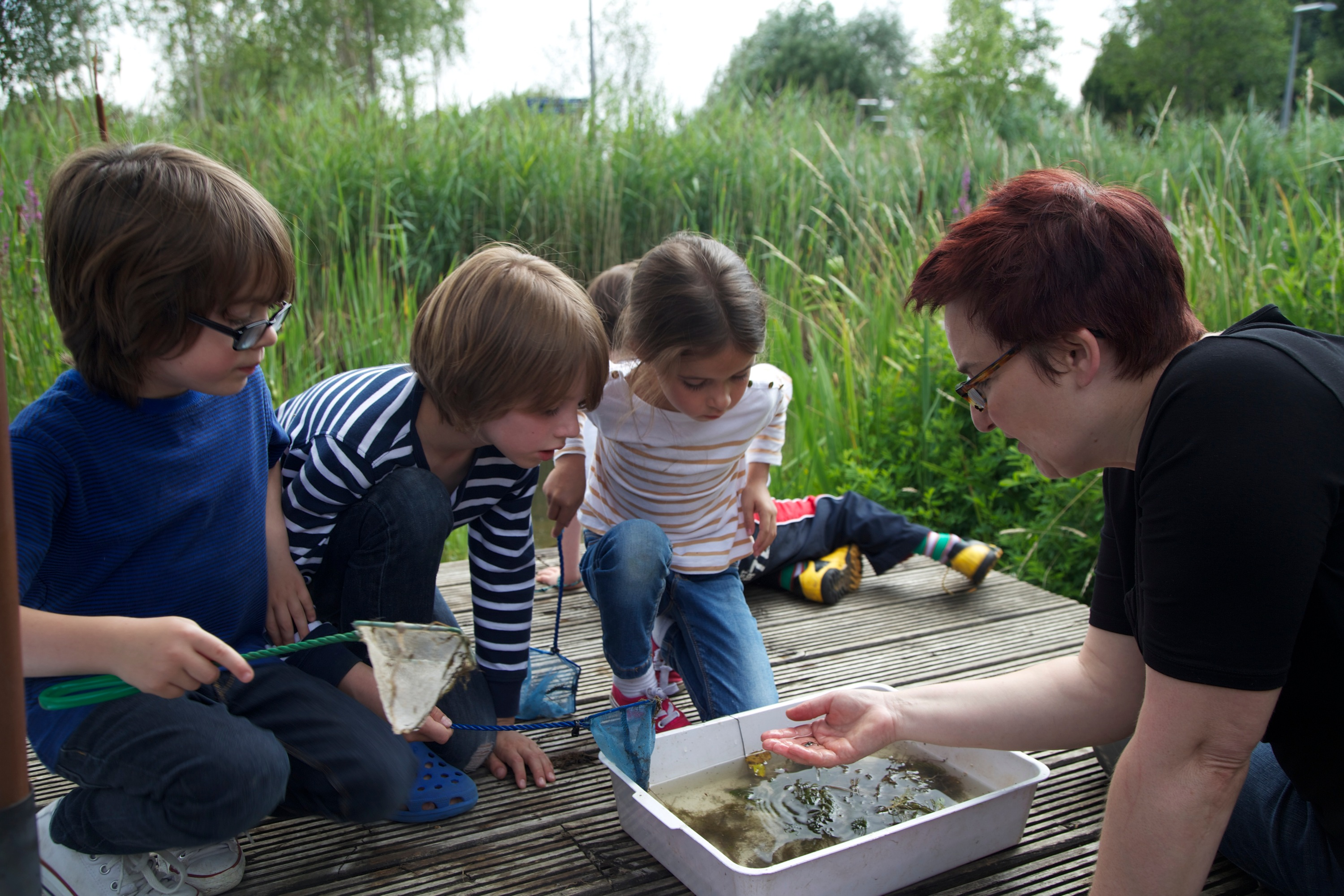 Children examine their catch after Mini-beast hunting at Greenwich Ecology Park.