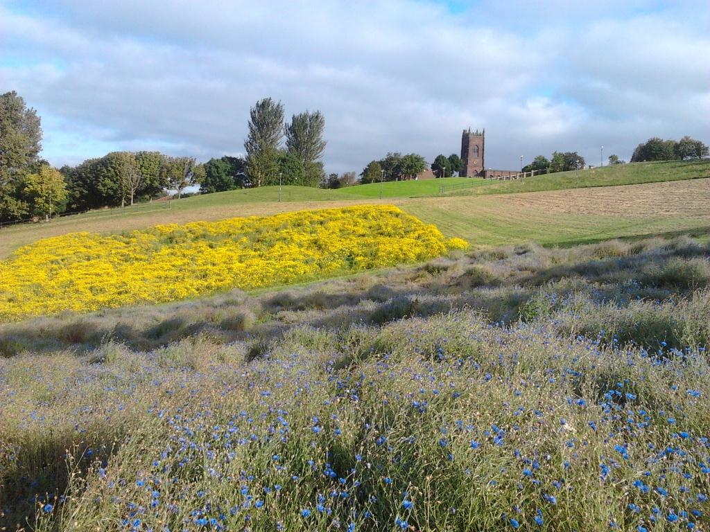 The view across Everton Park wildflower meadow in spring.