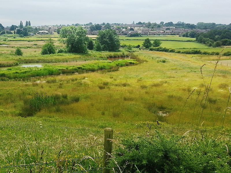 Land Trust meadow