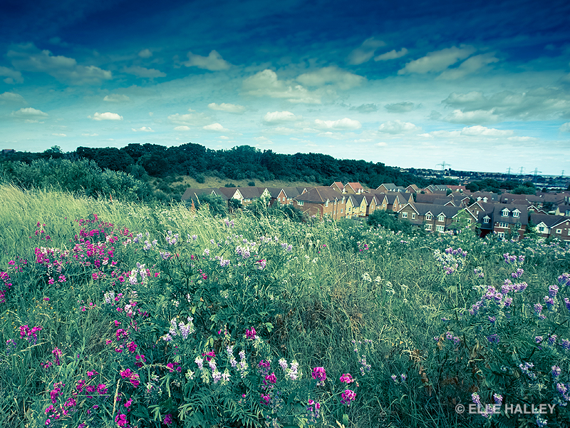 A view overlooking a wild flower meadow running down to a housing estate