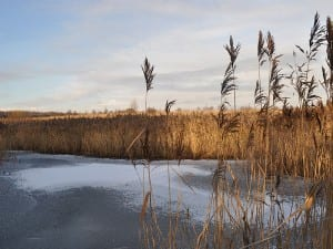 The frozen lake at Port Sunlight River Park in winter