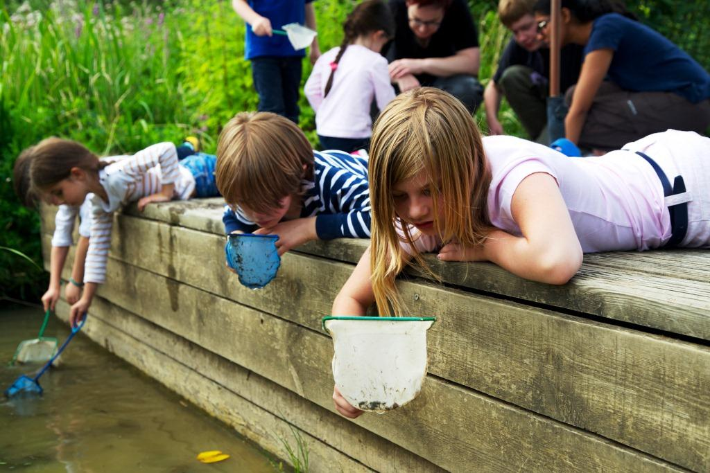 Children pond dipping at Greenwich Ecology Park