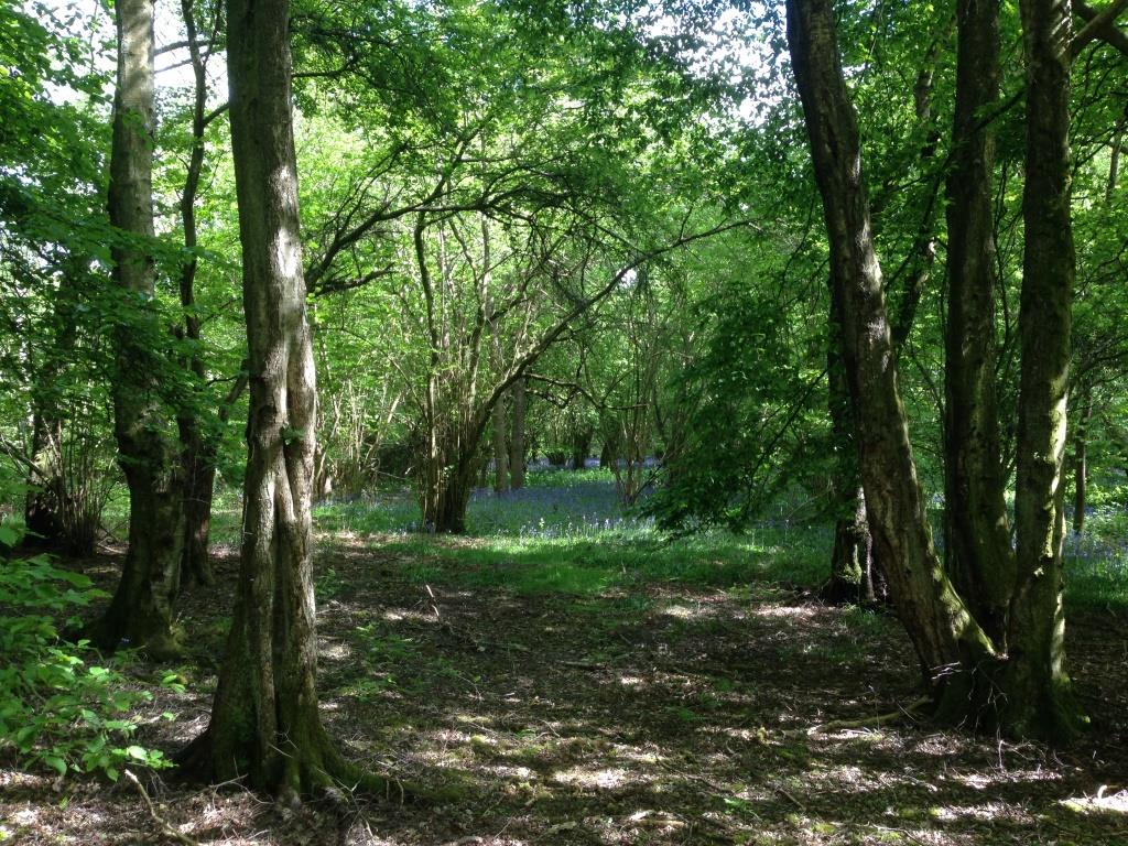 The Land Trust acquires Surrey ancient woodland site Bookhurst Wood