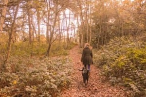 UK Charter for Trees, Woods and People