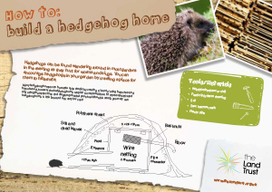 How to build a Hedgehog home