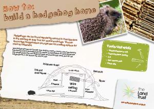 How to build a Hedgehog home