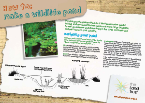 How to make a Wildlife Pond