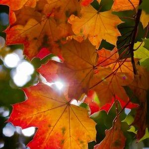 Autumn Colours at Pleasley Pit