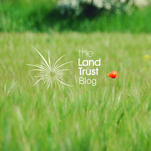 Land Trust Volunteers Blog