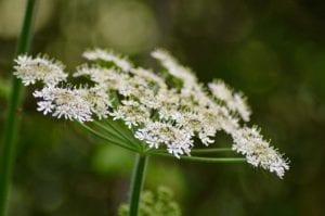 Twywell Flowers