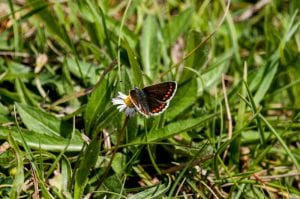 Twywell Butterfly