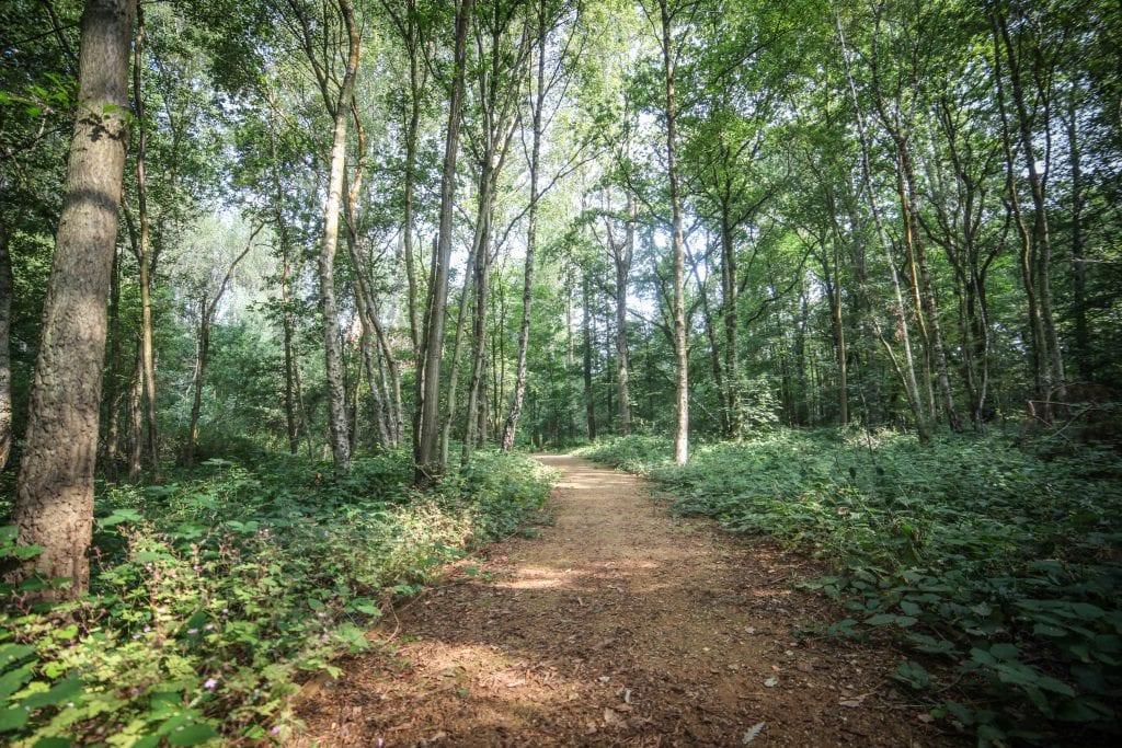 Wellesley Woodlands in summer