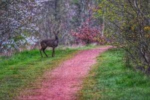Hayley Bryant - Brodsworth Community Woodlands
