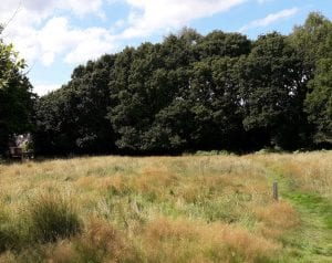 Little Heath Meadow