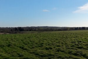 Horsley Meadows