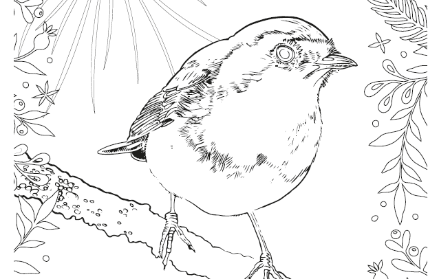 One of the Land Trust's Christmas colouring sheets features a festive Robin